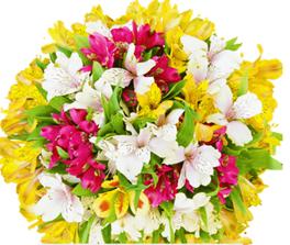 Blumenstrauß Sonneninsel für 12,90€ inklusive Versand
