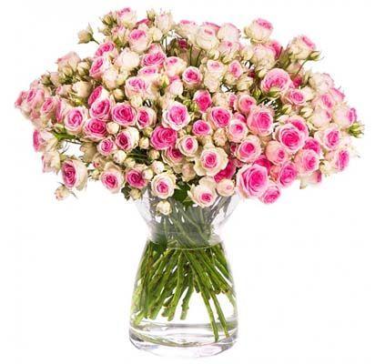 Rosen Rallye: mindestens 65 Rosenblüten für nur 17,90€ – bis zu 70 Blüten möglich