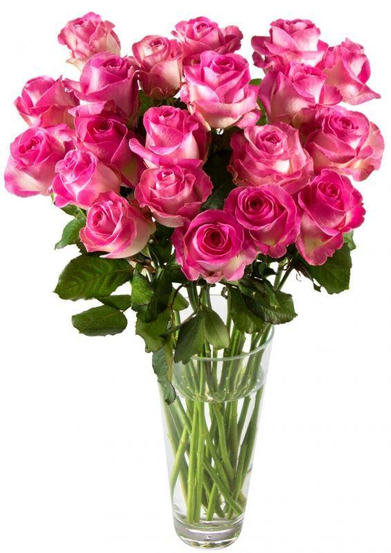 rosen Miflora   Rosenstrauß Emilia 20 rosa Rosen für nur 14,90€ inkl. Versand.