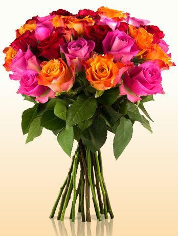 Rainbow Rosen
