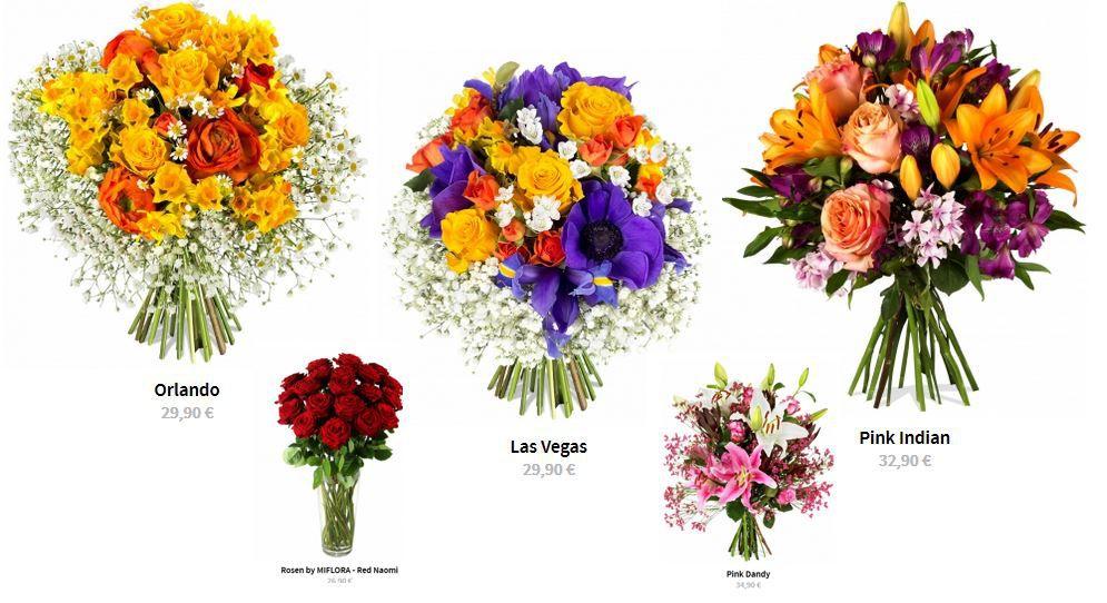 Hammer! Miflora mit 50% Rabatt auf (fast) alle Blumen