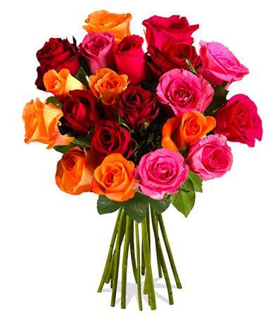 Lissy Rosenstrauß mit 20 bunten Rainbow Rosen für 14,90€   Update