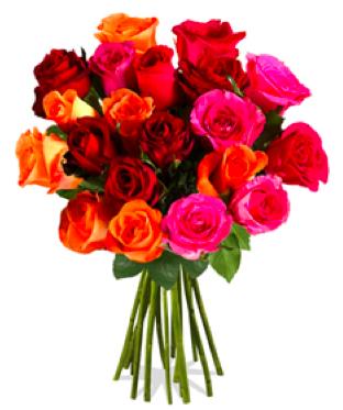 20 bunte Rosen (Stillänge ca. 40cm) für 9,95€ + 4,95€ Versand