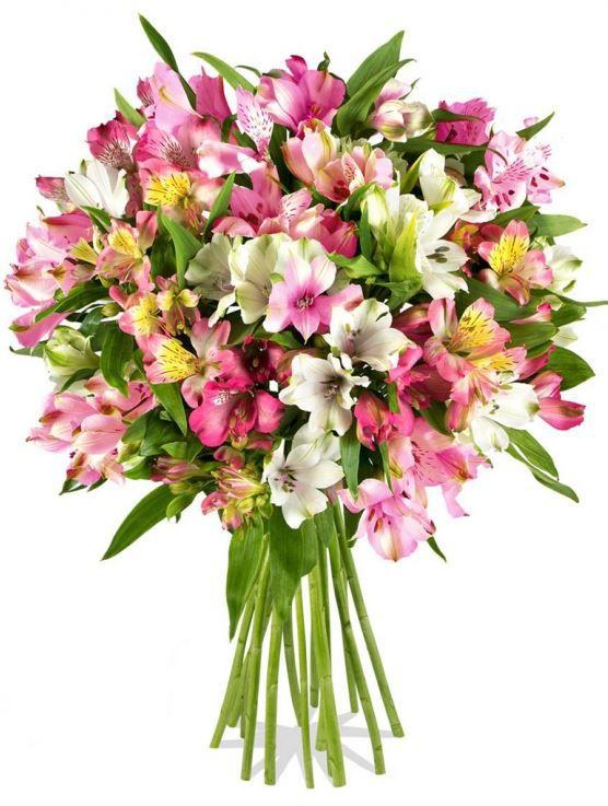 Rabattfehler? Blumenstrauss Pink Fifties statt 24,90€ für 13,92€