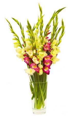 Sophie Strauß mit bunten Gladiolen für 12,90€