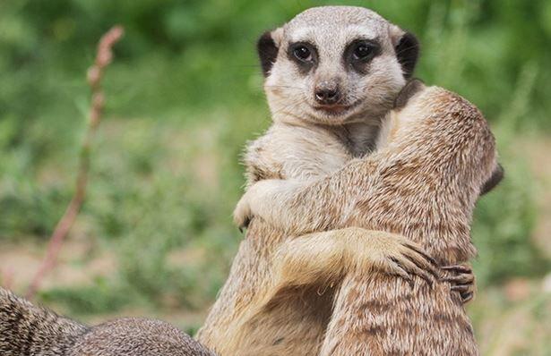 Zoo und Safaripark Stukenbrock   Eintrittskarte für nur 19,50€