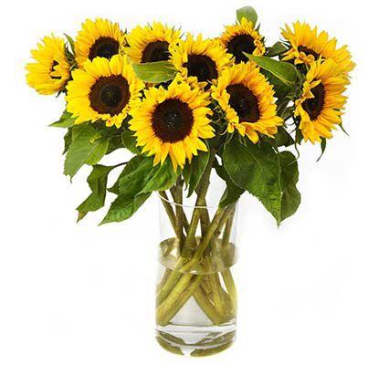12 Sonnenblumen inklusive Grußkarte für 16,94€
