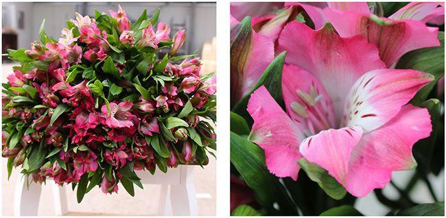 Alstromerien 20 pinkfarbene Alstromerien mit 80 Blüten für 14,89€