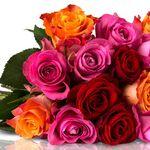Miflora: 25 Rainbow Rosen für nur 18,90€