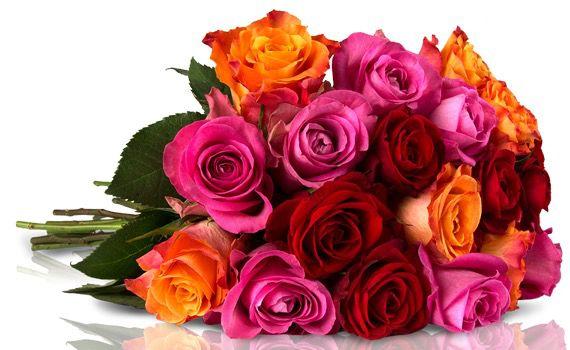 Rainbow Rosen Miflora: 25 Rainbow Rosen für nur 18,90€