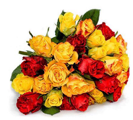 30 bunte Rosen im Sommermix für 17,85€