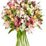Happy Lilien Hour – 15 Alstromerien für nur 16,90€