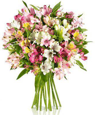 Happy Lilien Hour   15 Alstromerien für nur 16,90€