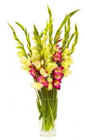Bunter Strauß mit 10 Gladiolen für 14,90€