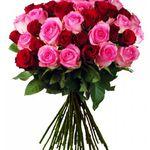 Rosentraum in Rosa – 25 Rosen für 18,94€