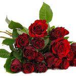 47 rote Rosen mit 50cm Länge für 26,94€ inkl. VSK