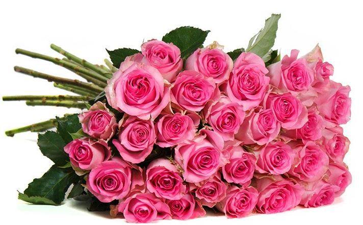 Rosentraum in Rosa   25 Rosen für 18,94€