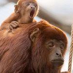 Kölner Zoo Tagesticket für 9,95€