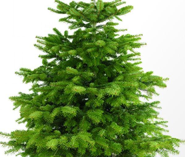 1. Advent Gewinnspiel! Wir verlosen 10 Weihnachtsbäume & 1 Fire TV Stick
