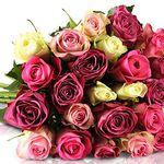 Bis zu 28 pastellfarbene Rosen für 18,90€ – Rosen Rallye!