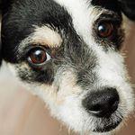 Katzenland und Hundeland mit 19% Rabatt auf Zubehör- und Pflegeprodukte