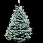 Premium Weihnachtsbäume: Nach Hause liefern lassen mit (Wunschdatum) -20% Exclusiv Gutschein