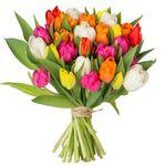 38 bunte Tulpen für 20,94€ inkl. VSK