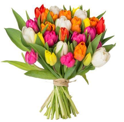 51 bunte Tulpen für 22,98€ inkl. VSK