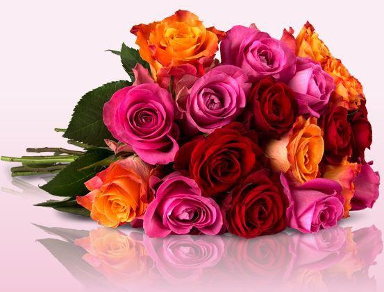 Neue Rosen Rally mit bis zu 30 Shiny Roses für 18,90€