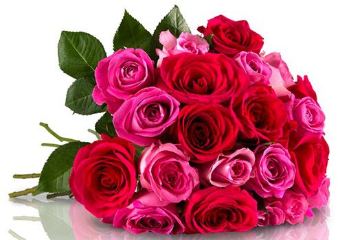 25 pinke Rosen für 21,85€