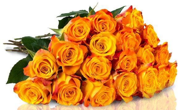 25 Orange Gelbe Rosen für 20,90€