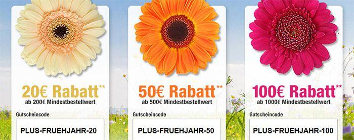 Bis zu 100€ Gutschein bei Plus.de   NUR HEUTE
