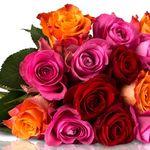 Miflora Rosen Rallye – 28 bunte Rosen für nur 18,90€