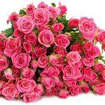 20 Tros Rosen mit 80-100 Blüten für 16,94€