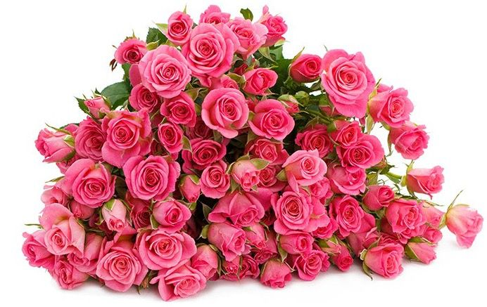 20 Tros Rosen mit 80 100 Blüten für 16,94€