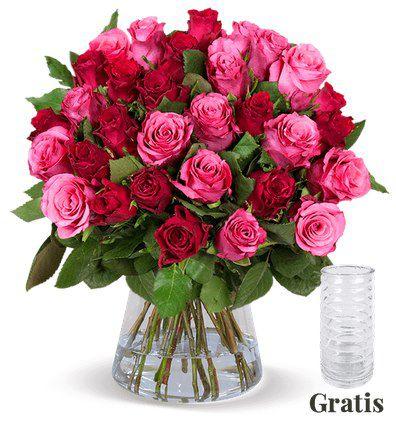 25 rot pinke Rosen + gratis Vase für 24,98€