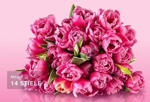 pinken Tulpen Tulpen Rallye mit 20 pinken Tulpen für 18,90€