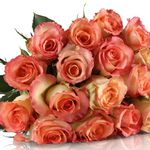 Graceful Rose – 20 rosa Rosen + gratis Grußkarte für 18,90€