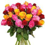 44 bunte Rosen in mind. 2 Farben für 23,94€