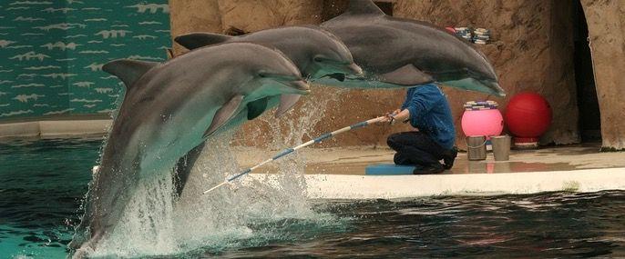Delfinvorfuehrung Zoo Duisburg Nachmittags Tickets + Delfinvorführung ab 5€