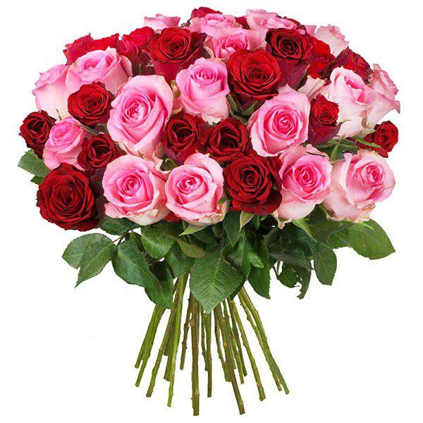 rosendeal lovely 1 1 Rosenstrauß Lovely mit 30 Rosen für 19,94€ inkl. Versand