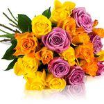 Bis zu 28 bunte Rosen für 18,90€ – Rosen Rallye!
