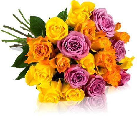Bis zu 28 bunte Rosen für 18,90€   Rosen Rallye!