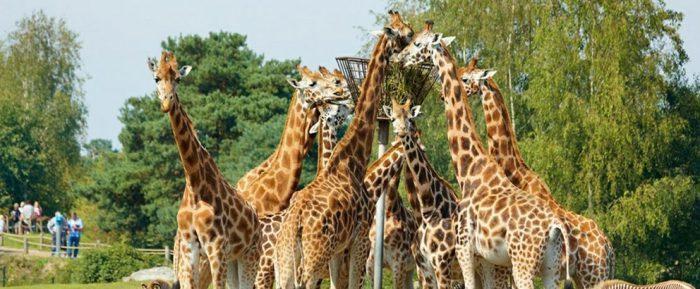 safari Bis 5 Tage im Ferienpark Beekse Bergen im Bungalow für bis zu 4 Erwachsene und 1 Kind ab 179€