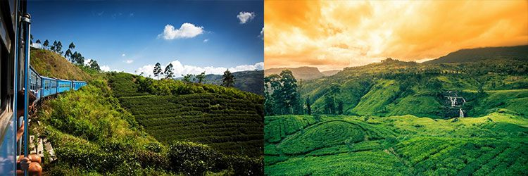srilanka natur 15 Tage Rundreise durch Sri Lanka ink. Flug, Hotels & mind. Frühstück ab 1.259€ p.P.