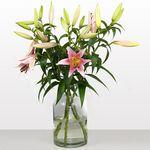 10 langstielige pinke Lilien für 16,94€