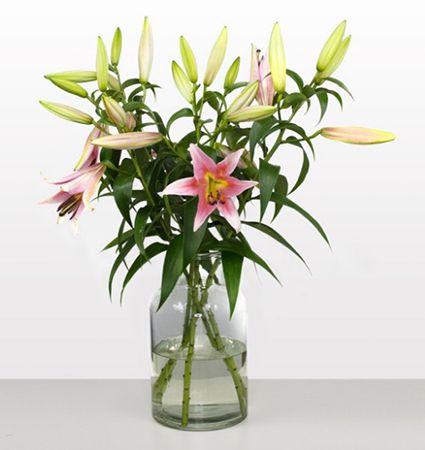Bildschirmfoto 2016 08 06 um 13.53.49 10 langstielige pinke Lilien für 16,94€