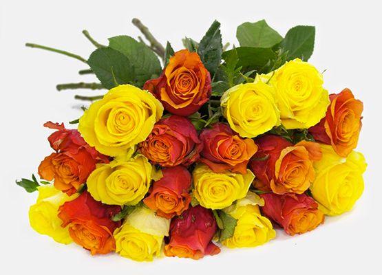 20 Rosen Sunshine für 16,94€