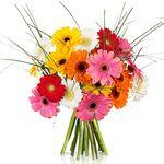 20 bunte Germini Blumen für 14,90€