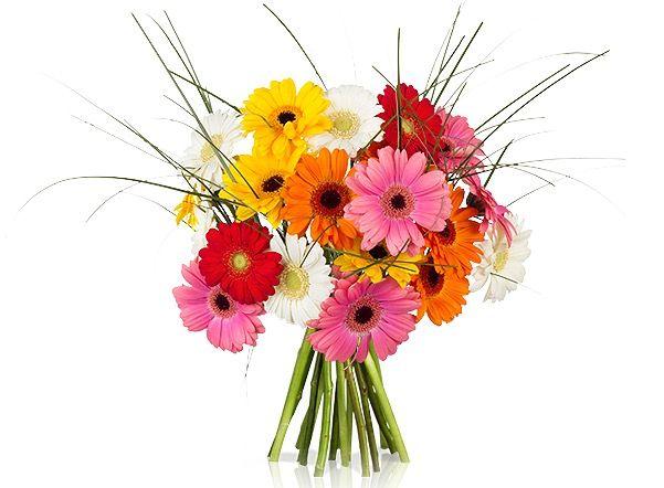 Bildschirmfoto 2016 08 26 um 09.54.55 20 bunte Germini Blumen für 14,90€